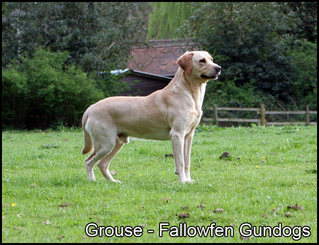 Grouse 2017 Fallowfen A
